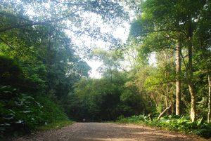 Công bố hiện trạng rừng toàn quốc năm 2017