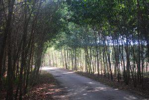 """Hội thảo: """"Thúc đẩy rừng trồng sản xuất quy mô hộ gia đình theo hướng quản lý rừng bền vững và có lợi nhuận ở Việt Nam"""""""