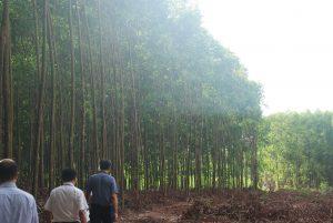 Công bố diện tích rừng quốc gia năm 2019
