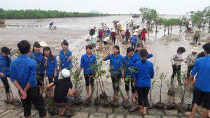 Thanh Hóa: Trồng rừng ngập mặn ven biển góp phần ứng phó biến đổi khí hậu