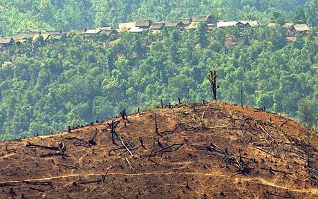 Hưởng ứng ngày môi trường thế giới 5-6: Thâm canh trên đất dốc – Biện pháp hữu hiệu góp phần ứng phó biến đổi khí hậu
